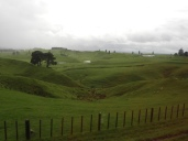 On the road to Hobbiton (outside Matamata)