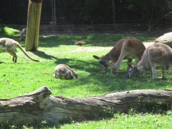 kanga & roos :)