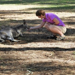 Mom fedding a kangarooo