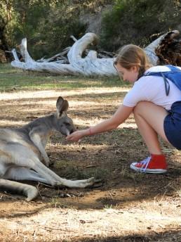 Me feeding a kangaroo