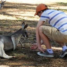 Rowan feeding a kangaroo