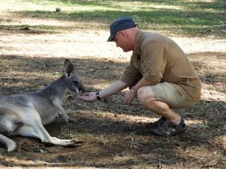 Dadfeeding a kangaroo