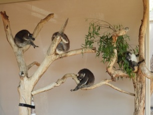 kaolas hanging